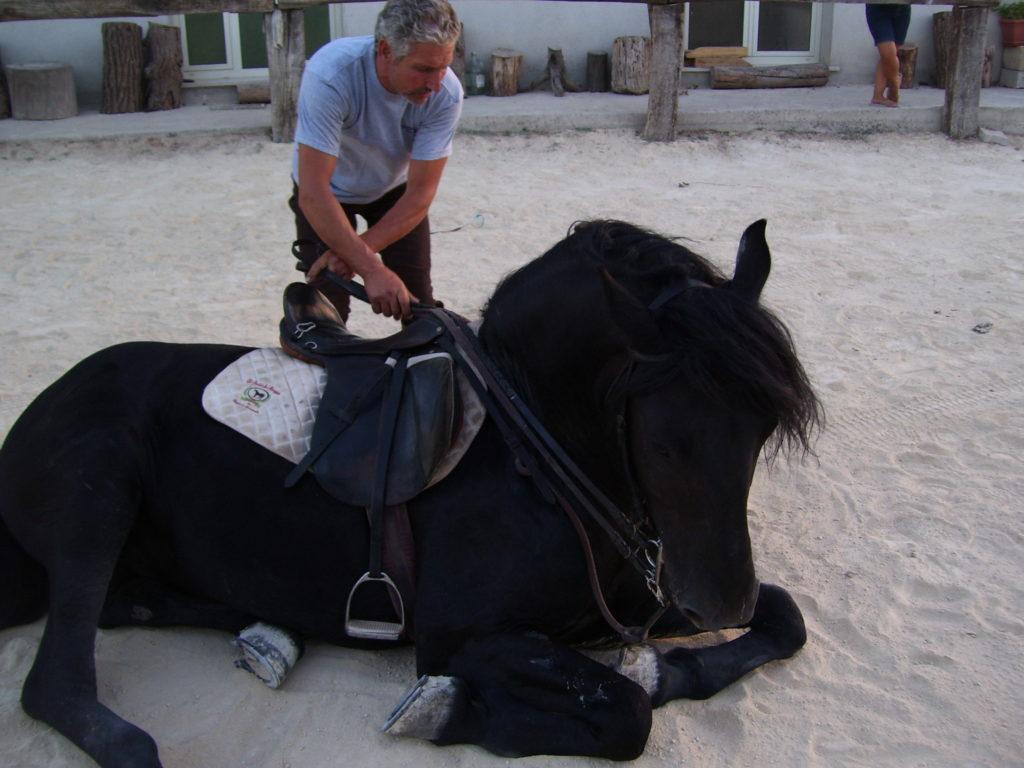 Addestramento cavalli
