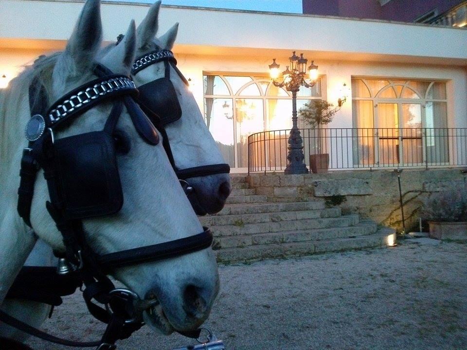Cavalli Lipizzani Equitazione Salento Coppola